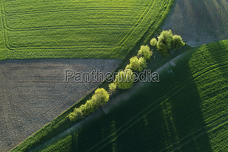 aerial view of trees between agricultural