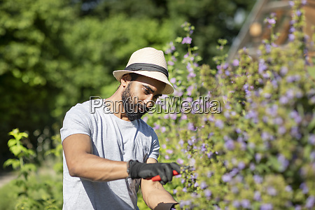 portrait of bearded young man pruning