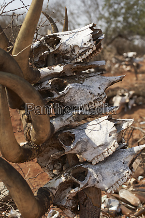 mucubal traditional cemetery virei angola