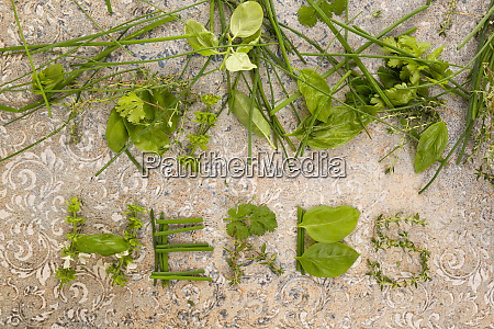 culinary cooking herbs