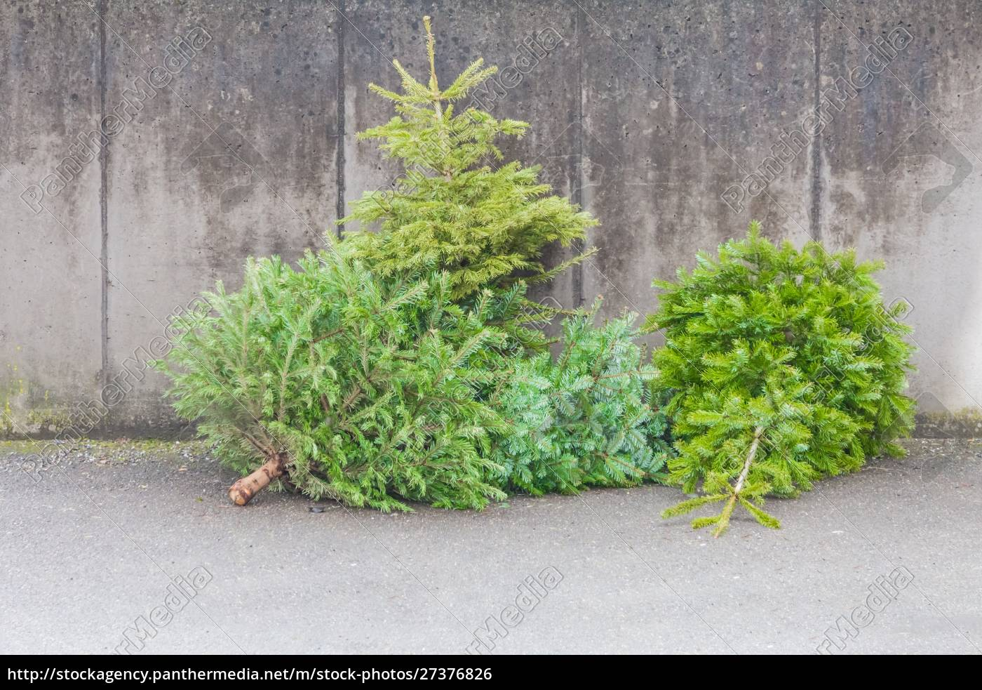 traditional, green, christmas, trees, firs, on - 27376826