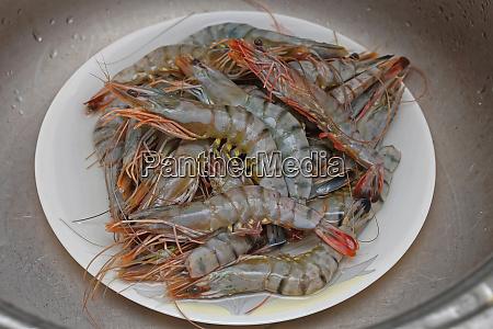 shrimps tiger
