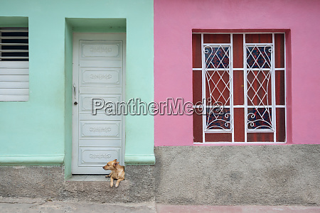 dog lounging outside a colorful house