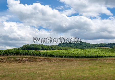 france jura arbois vineyard landscape in