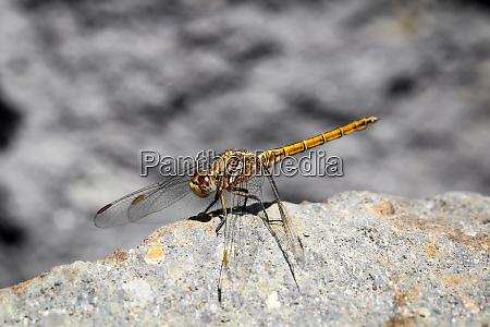 macro close up of a dragonfly