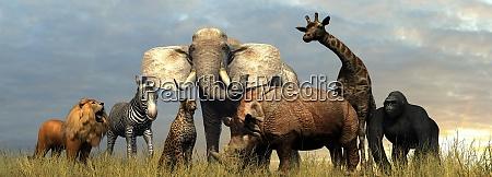 various wild animals of africa on