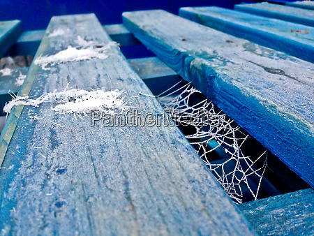 blue palette with frozen spider webs