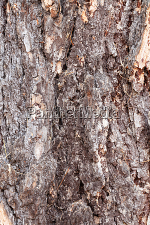 furrowed brown bark on old trunk