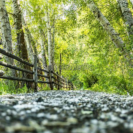path through lush forest