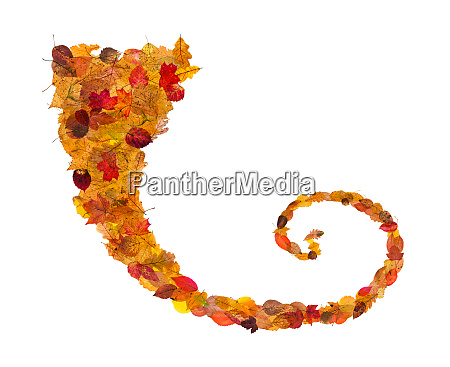 curl from fallen leaves isolated on