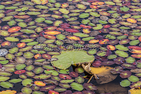 colored leaves on waters surface