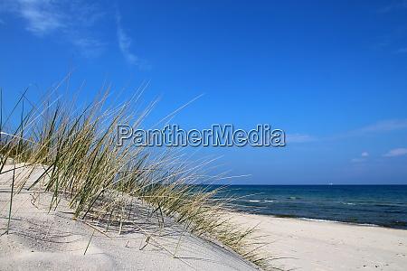 beach dunes natur dune island grasses
