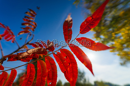 branches and autumn leaves against the