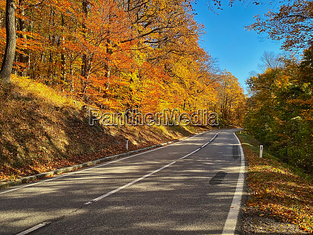 country road through autumn forest