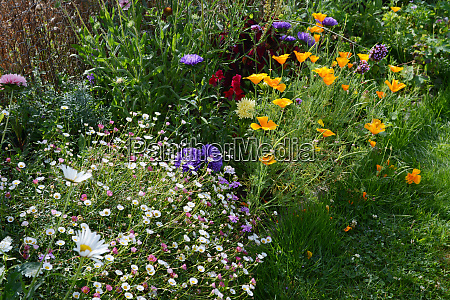 flourishing summer flower bed