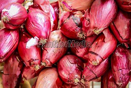 fresh onions onions background ripe onions