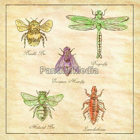 bumble bee european hoverfly dragonfly hlalactid