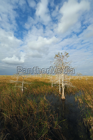 clouds over sawgrass prairie in everglades