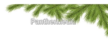 fir branch upper right corner