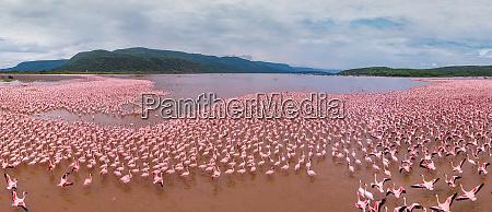 aerial view of flamingos on lake