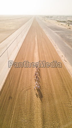 aerial view of jockeys and camels