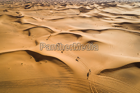 aerial view group of camels wandering