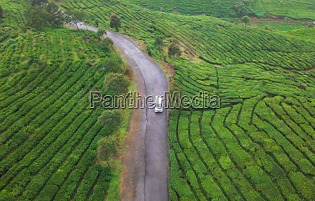 aerial view of rancabali tea plantations