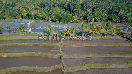 aerial view of rice fields in