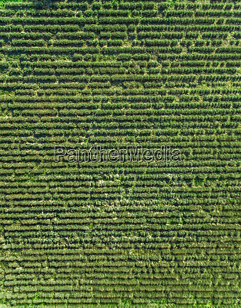 aerial view of agricultural field at