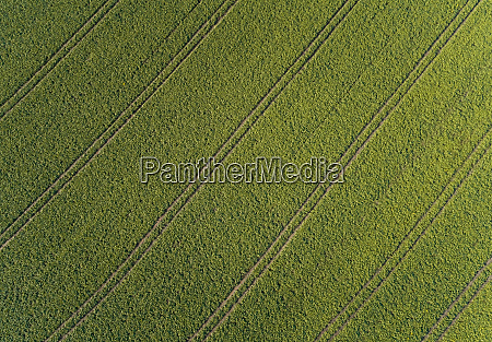 aerial view of agricultural rows during