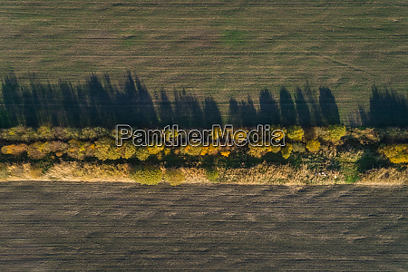 aerial view of a forest line