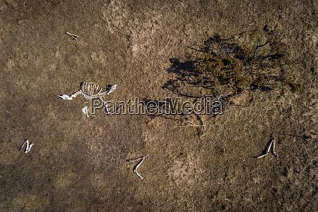 aerial view of animal skeleton on