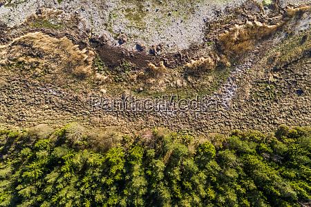 aerial abstract view of algae beach