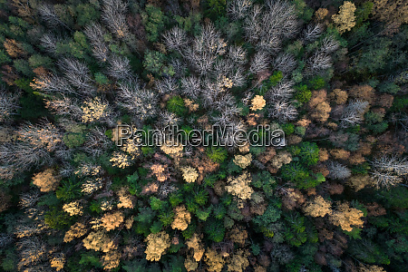 aerial view of the forest during