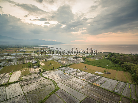 aerial view of agricultural rice fields