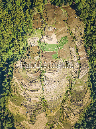 aerial view of rice terrace on