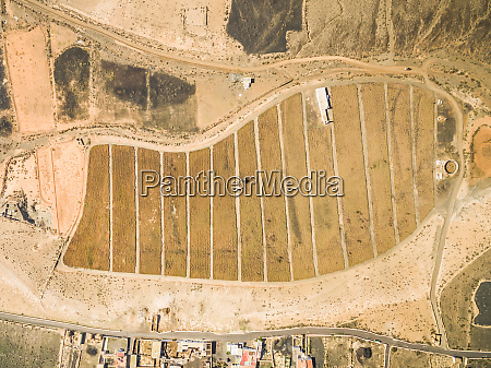 aerial view of aloe vera plantation