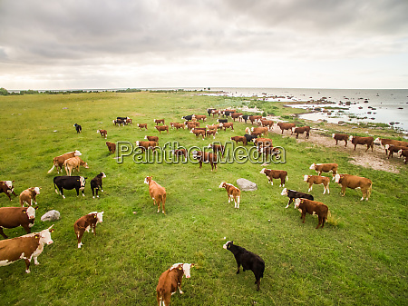 aerial view of an herd of