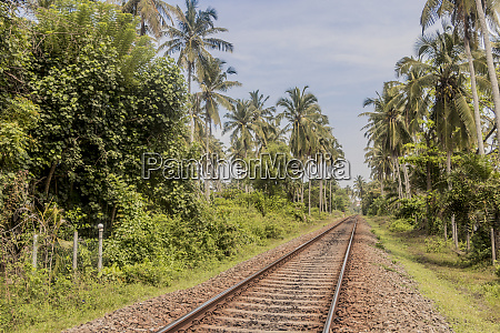train tracks in sri lanka tropical