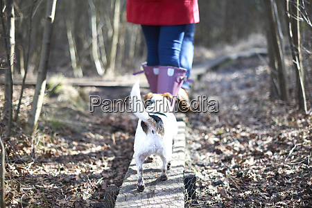cute dog following owners hiking on