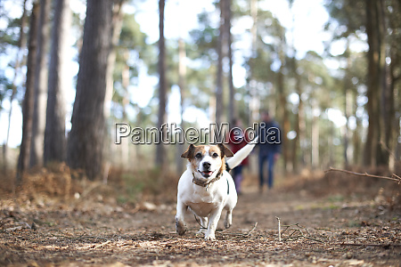 happy carefree dog running in autumn