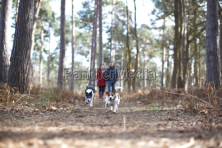 dogs running ahead of couple hiking