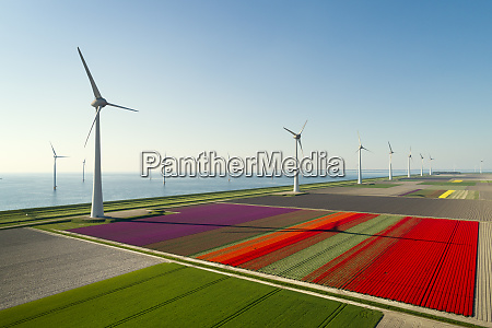 windfarms both on and offshore blossoming