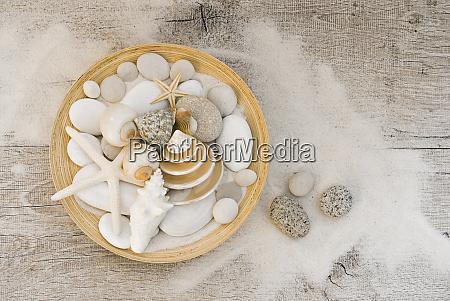 coastal still life bowl with shells
