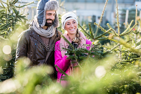 couple buying christmas tree on market