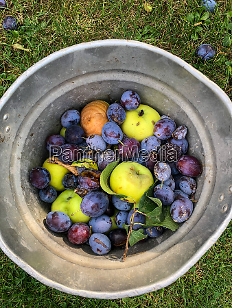 apples and plums as waste in