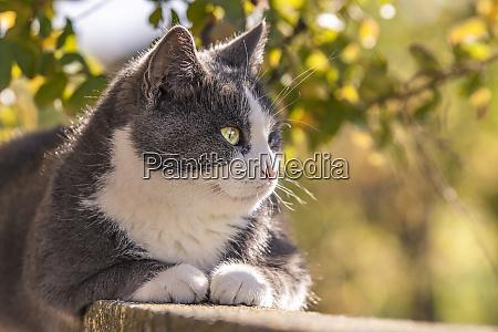 portrait of a gray cat 2