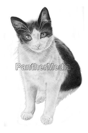 black and white cat illustration