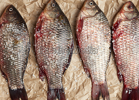 whole fresh crucian fish with scales