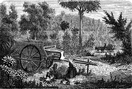 oxcart lao vintage engraving